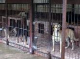 NIK o ochronie zwierząt bezdomnych